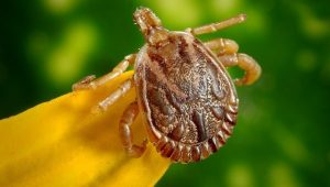 Podcast 5: Lyme Disease and Subarachnoid Hemorrhage